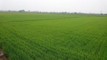 嘉南一期稻作是否停灌 農委會:11月底前決定