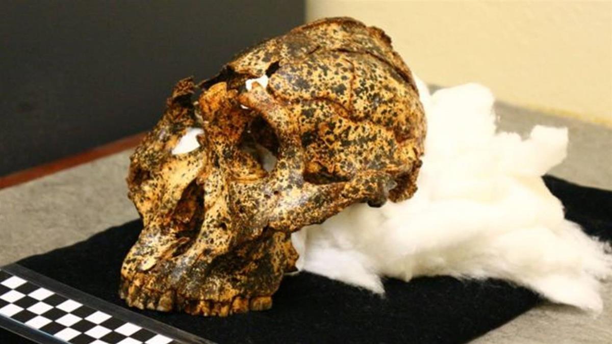 南非發現200萬年前頭骨化石 提供人類進化新信息
