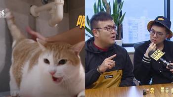 獨/貓界網紅「黃阿瑪」為公仔怒告廠商 2作者首現身