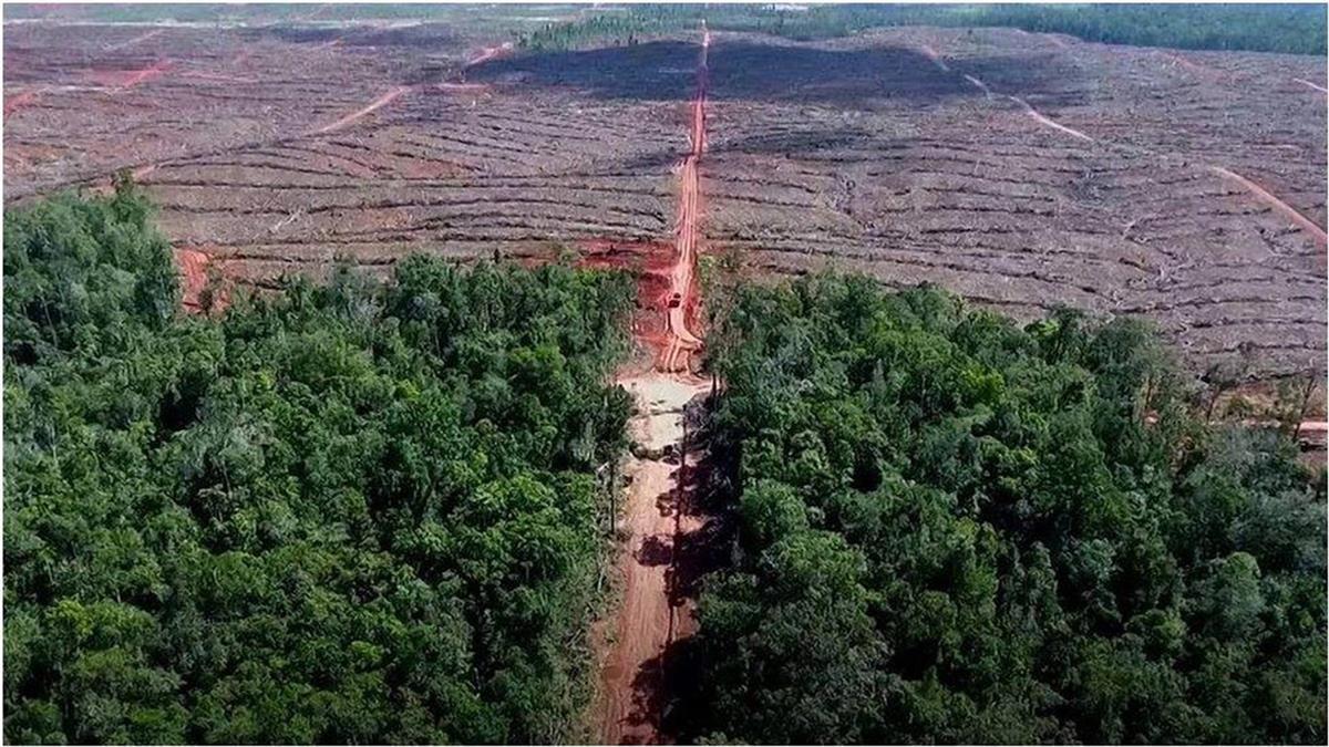燃燒的傷口:亞洲最大雨林的命運