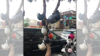 新竹風大長出「安全帽樹」 網笑:裝置藝術