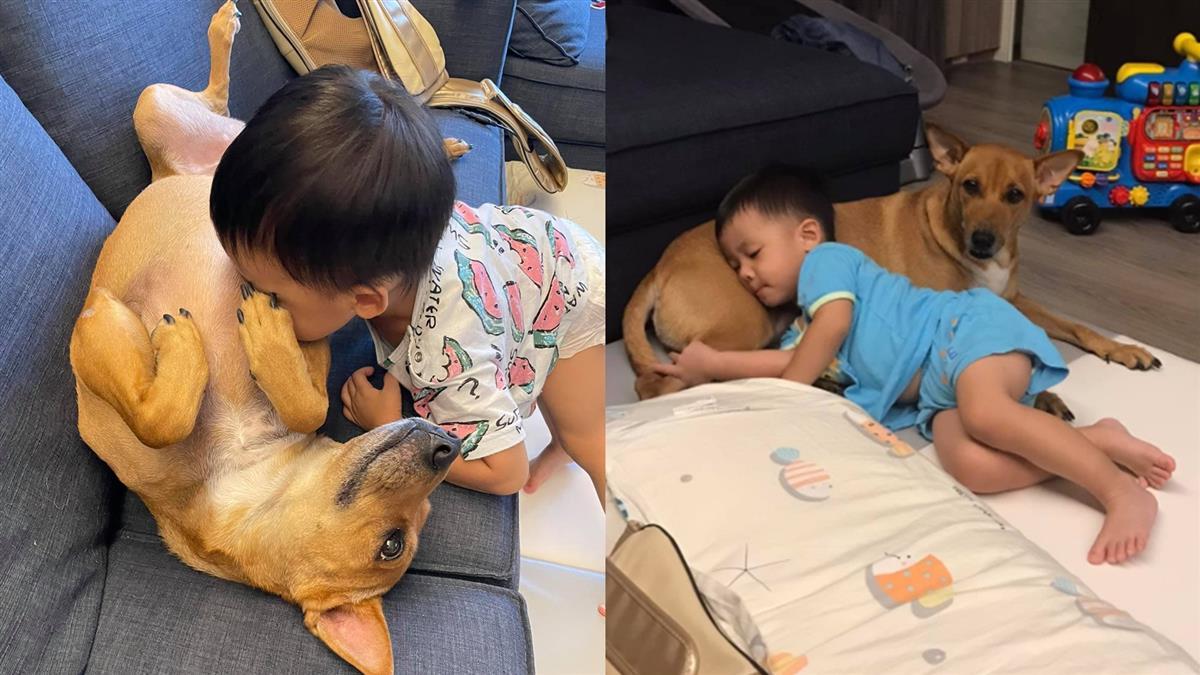 喝奶喝上癮!2歲童狂吸愛犬乳頭 母目睹全程笑哭:10顆都不放過