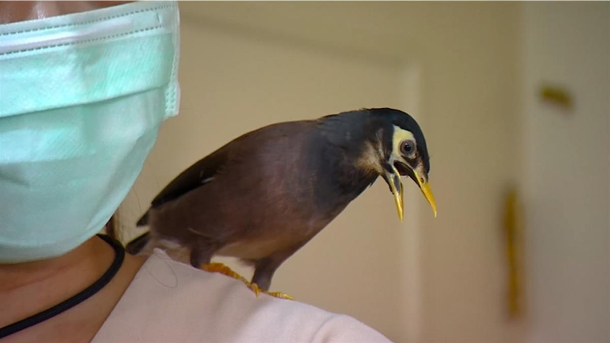 寵物鳥太吵!房東限期改善否則搬離 房客控:說詞不一