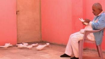 北京與卡拉奇之間的一段鴿子奇緣:巴基斯坦男子不為人知的昔日記憶