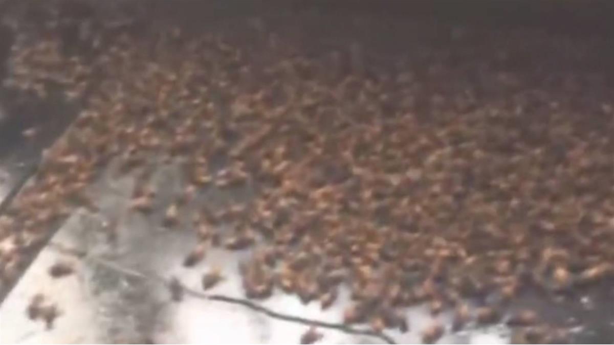 20隻蜜蜂飛進廚房!他為護妻全打死 隔天上萬兄弟來「報仇」