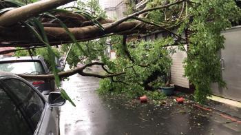 快訊/北市信義區巨樹倒塌!下方汽車慘被砸 警拉封鎖線管制