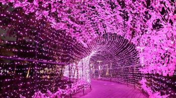 「粉紅隧道燈海」夢幻降臨新北 新莊中港大排河廊變身快閃聖誕燈海