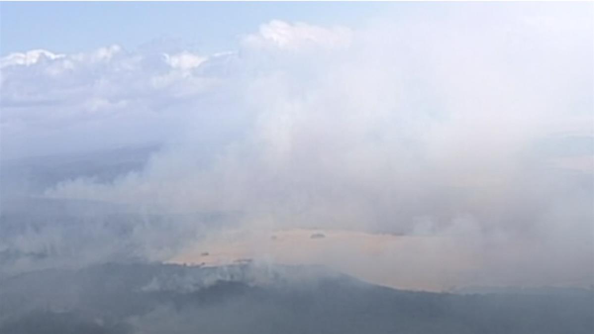 澳洲野火肆虐 逾6萬無尾熊喪命受傷或流離失所