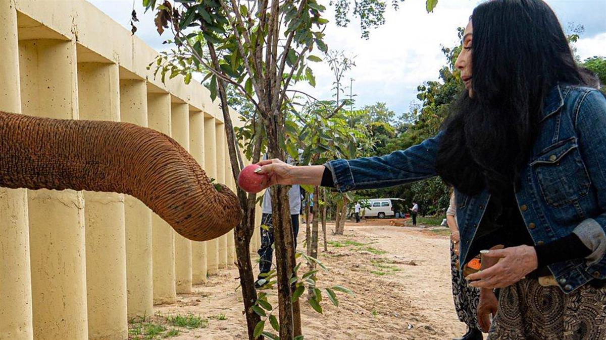 「世界上最孤獨的大象」:被囚禁35年終獲自由