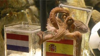 章魚和人的異同:人有中樞神經 章魚渾身是「腦」