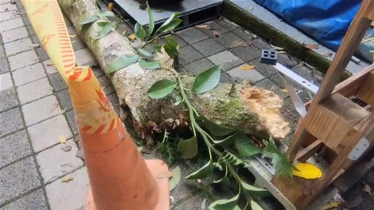 豆腐街樹木突斷裂 父子遭砸顱內出血送醫