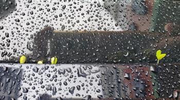 汐止大雨狂噴1個月 她開車傻眼:一整排發芽