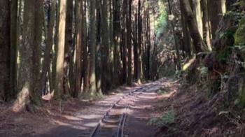往眠月線走在祝山支線上 林鐵處一天開83張勸導單