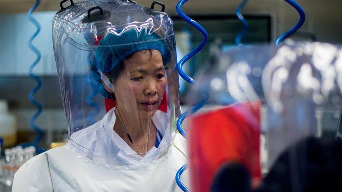 新冠溯源:武漢科學家石正麗稱「歡迎任何形式」的訪問,以調查實驗室洩露指控