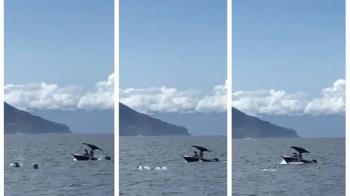 小艇衝撞鯨豚!判緩起訴一年繳公庫2萬元警惕