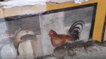 龐貝城小吃店遺址出土 驚見「生存2000年公雞」
