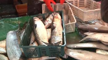 慘!暖冬捕嘸烏魚 漁民無奈:30年沒看過這麼慘