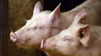 萊豬開放、基本工資調帳 2021新制一次看懂