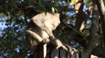 婦動物園吃麵包遭圍攻 慘被獼猴群弄斷「左手肌腱」