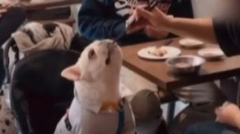 狗用過的筷子你敢用?飼主拿筷子餵狗挨轟