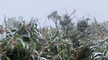 抹茶山下雪!海拔950m聖母山莊飄冰霰夾雪花美翻