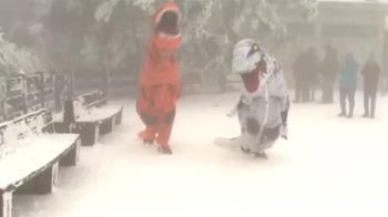 太平山上演恐龍大對決 雪地裡又仆街又打鬥