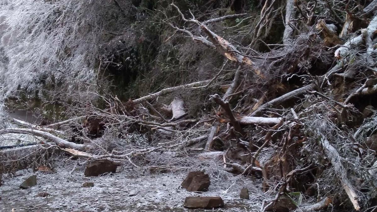 快訊/寒流發威下雪釀禍!南橫公路樹倒 緊急搶通中