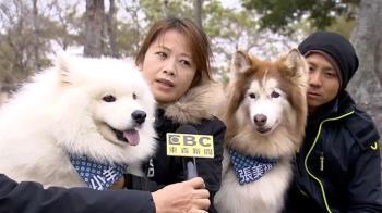 北市寵物沒保暖將罰!飼主:寒帶長毛狗也要穿衣?