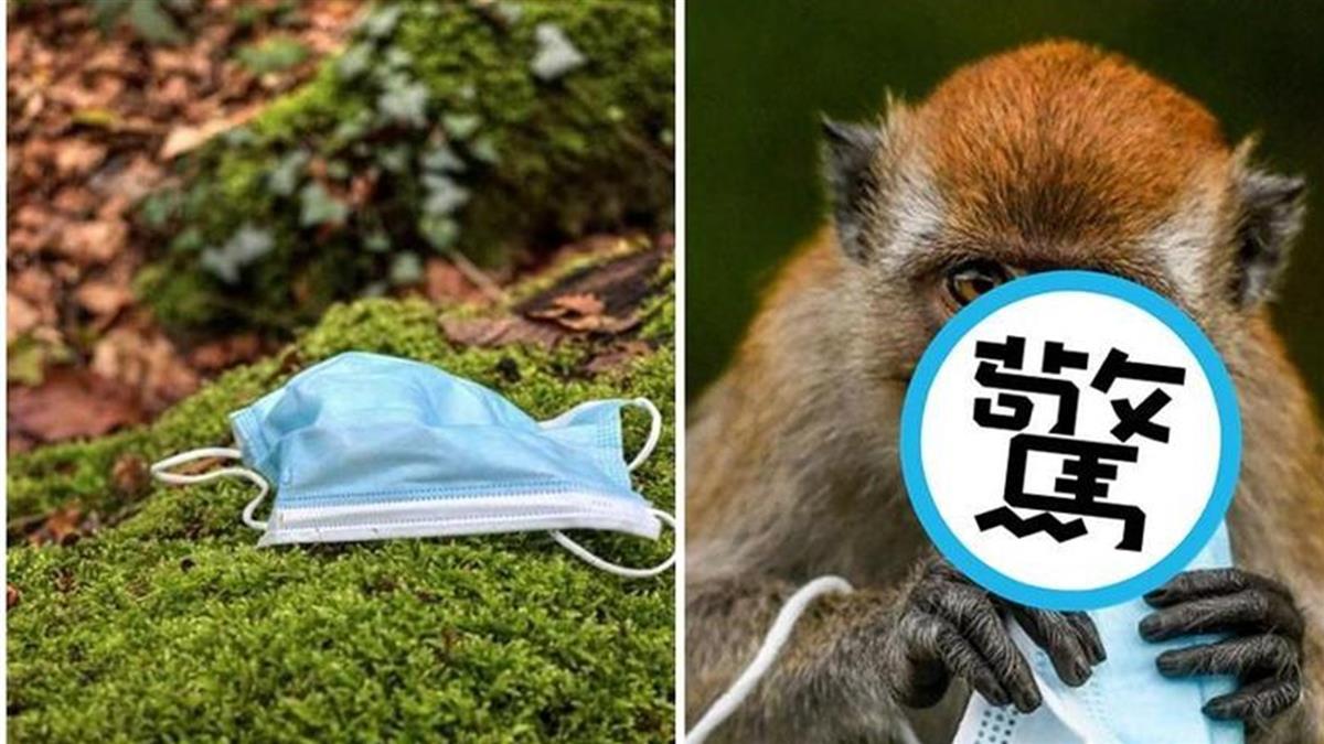 挽救人命口罩釀生態浩劫 「獼猴母子搶吞」畫面超衝擊
