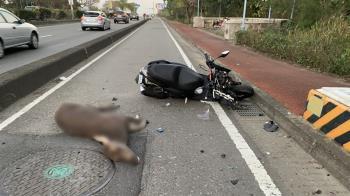 彰化男開車撞到水鹿 車頭全毀騎士慘摔送醫