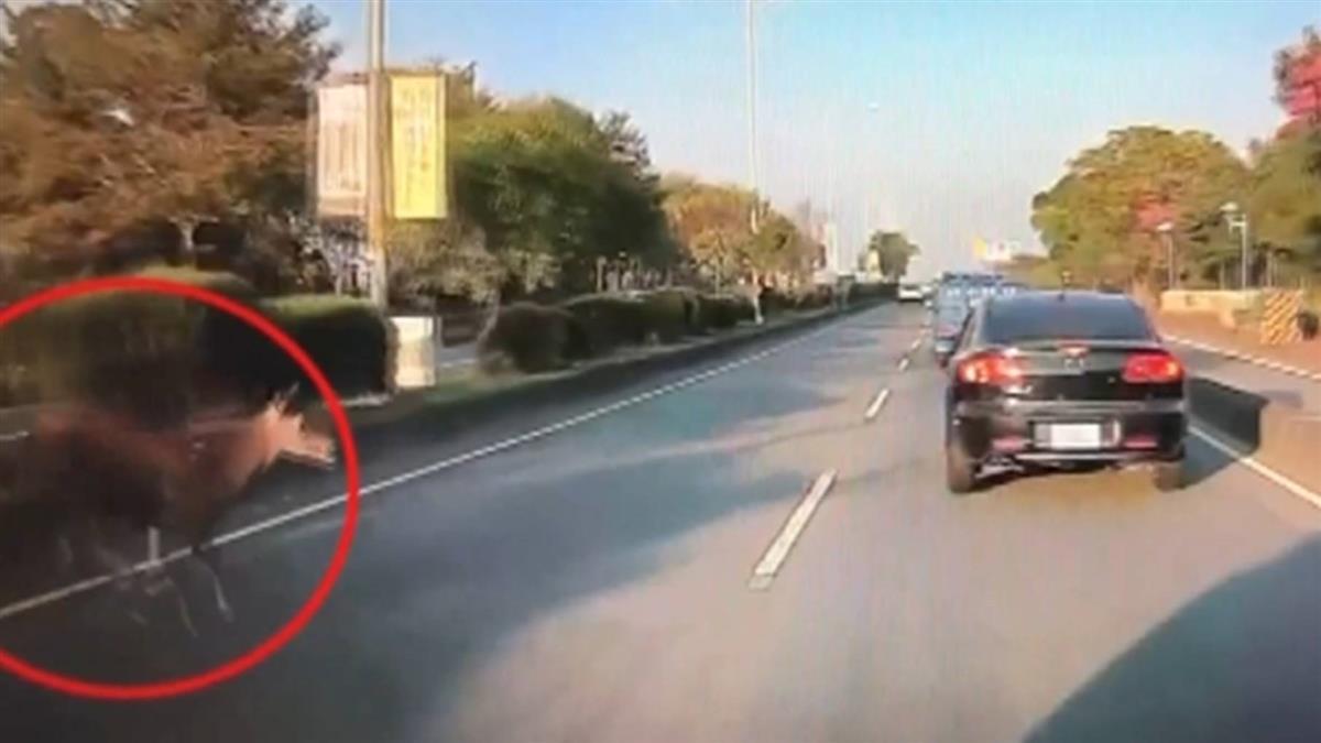 車禍肇事竟是牠!水鹿突竄出 釀3車撞1人傷