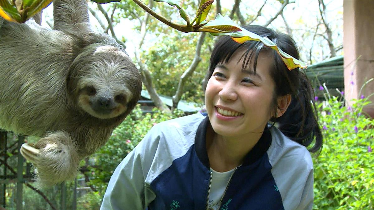 尋訪世界「動物孤兒院」 白心儀邀您周日一起來聽故事