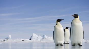 冰天雪地嚴寒中生存的最酷動物