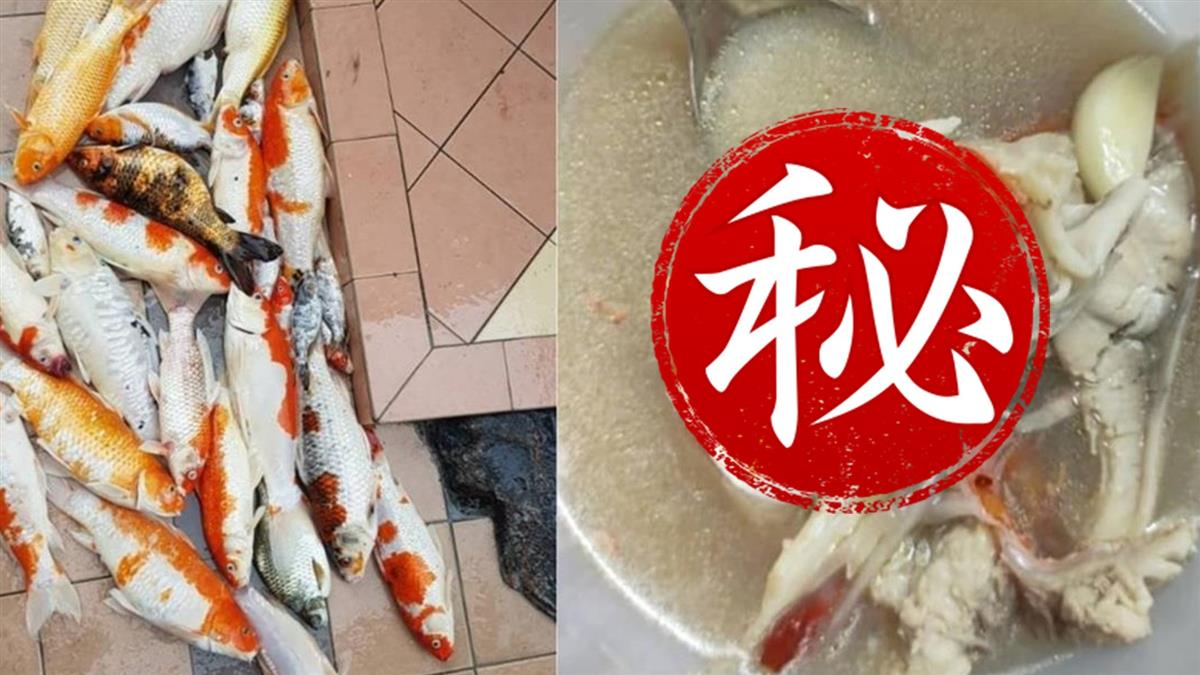 萬元錦鯉缺氧全死光  飼主剁成塊煮魚湯:丟掉浪費