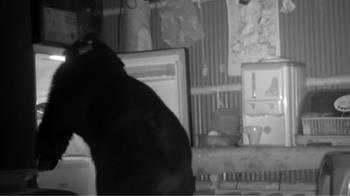 不斷往淺山移動 黑熊711闖果園農舍又受困