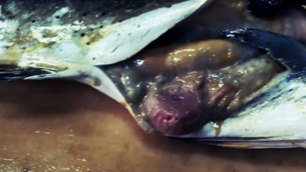海鮮含塑膠微粒!台灣人平均年吃1.6萬個微塑膠