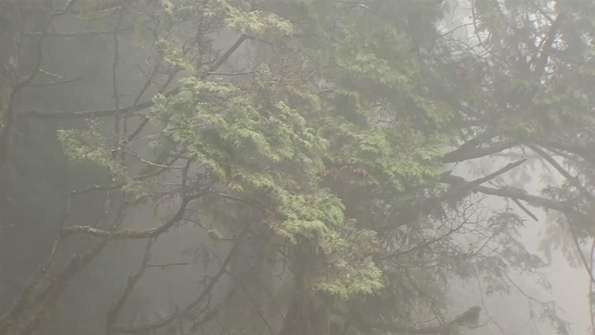 太平山體感溫度-2 雲霧多、遊客上山追霧淞