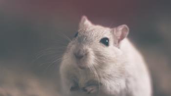 今年首例漢他病毒驚現高雄 染疫男家中抓14隻老鼠
