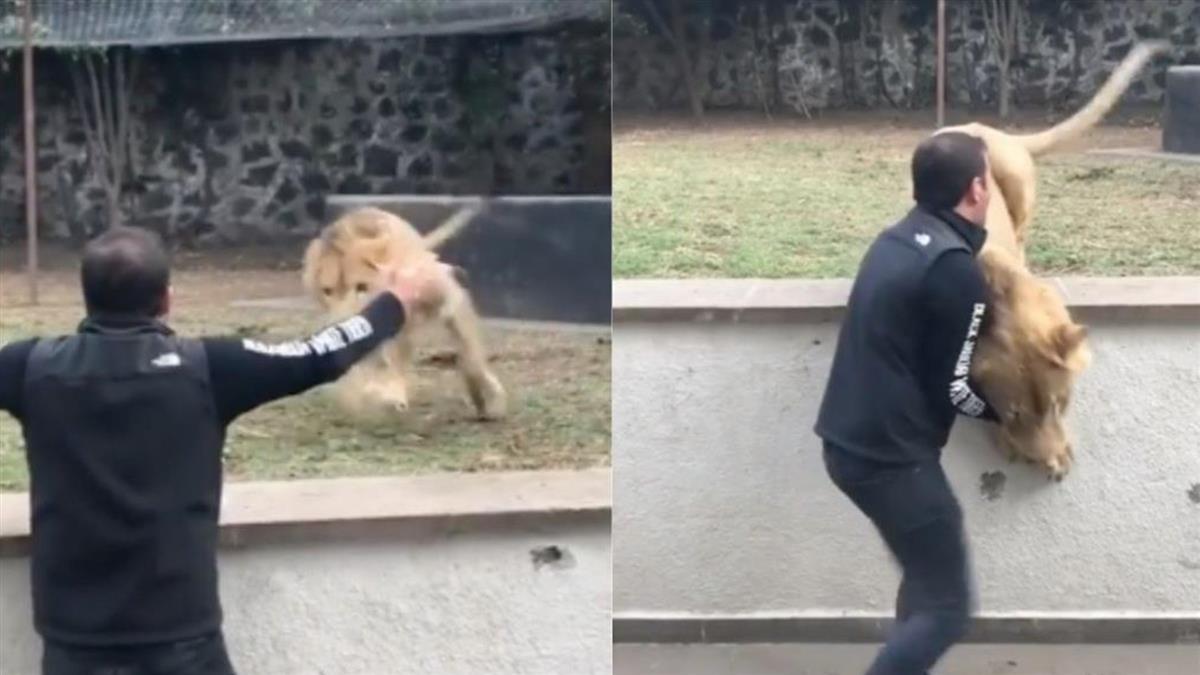 大貓狂奔見救命恩人「用臉剎車」 飛撲撒嬌:快抱我!