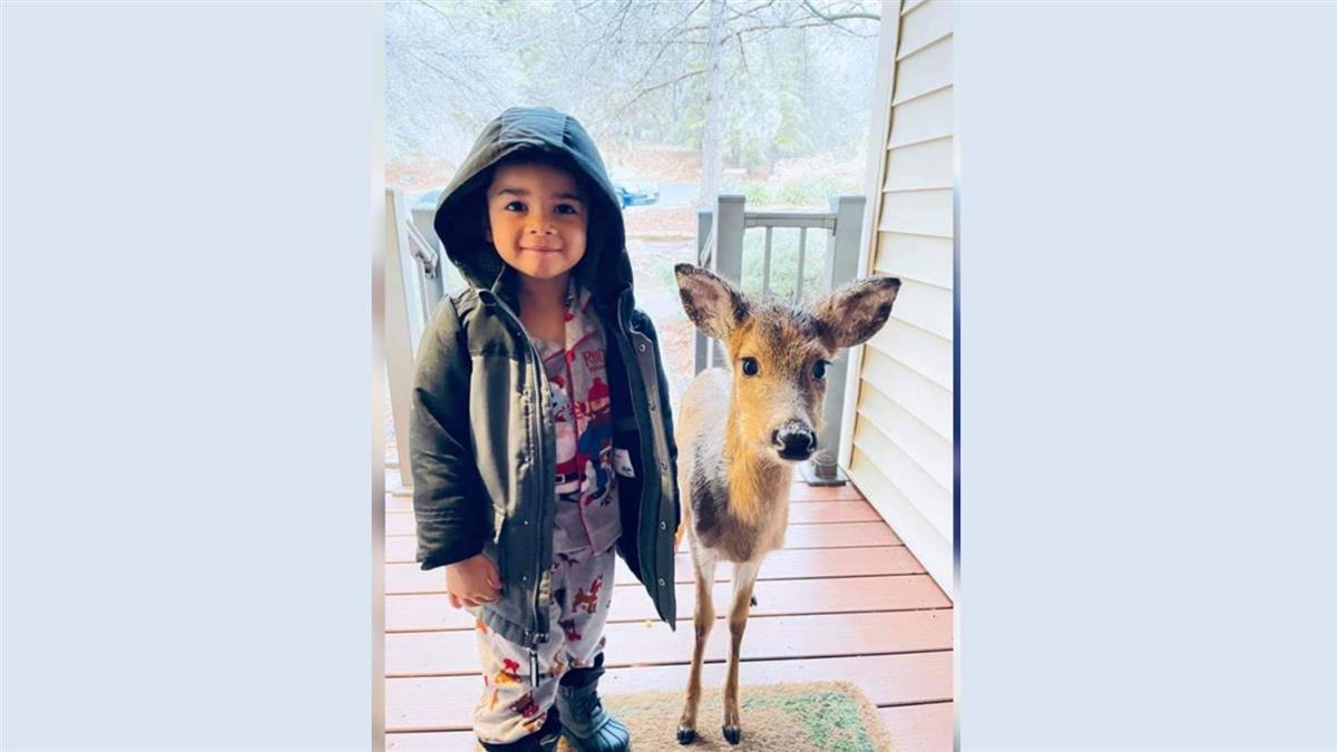 動物森友會真實版 媽媽開門驚見4歲兒帶小鹿回家