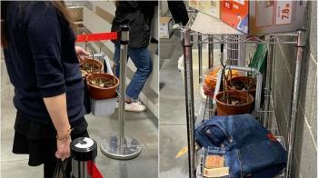 台灣人夠猛!女提2盆「枯萎盆栽」要退貨 賣場還真的受理