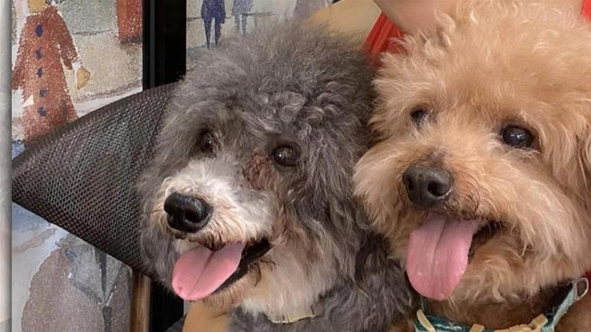 愛犬遭拔17顆牙「失血過多失明」 女星氣炸痛譙黑心獸醫