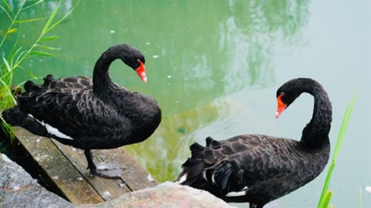 北京又有新疫情 高致病性H5N8禽流感爆發