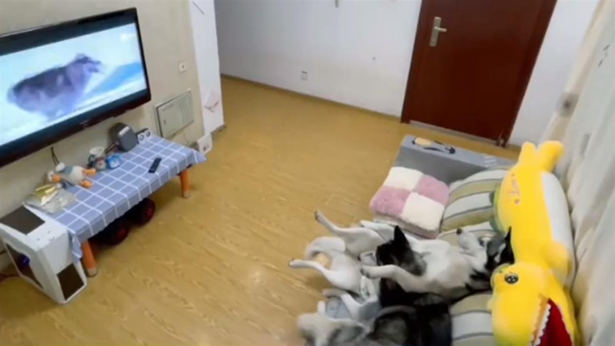 靡爛二哈懶沙發 聽到爸回來…秒關電視裝乖打掃