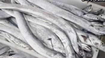 天津進口白帶魚驗出新冠 863箱恐已吃下肚