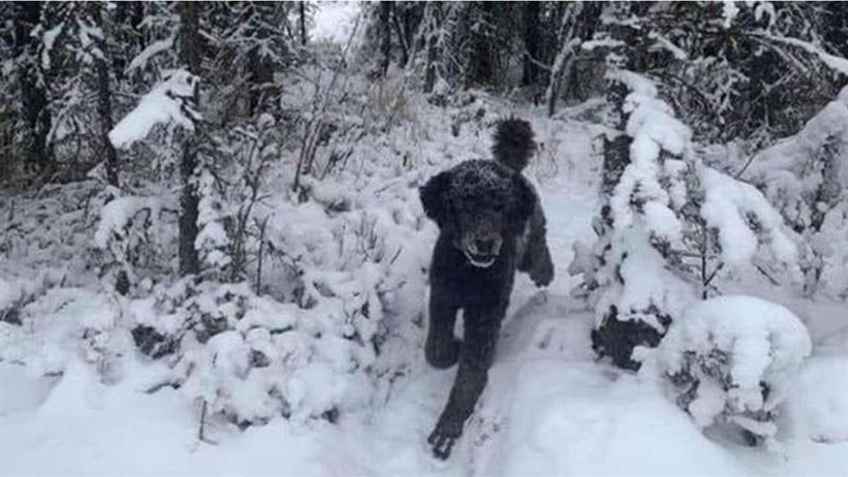 第一眼「雪地裡是人還是狗」?這1選擇代表悲觀