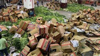 「滿地蔬菜山」銷毀遭疑浪費 北農曝2原因被打臉