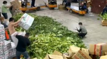 天氣暖+疫情影響 菜價暴跌北農數十噸連箱丟