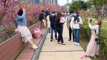 春節賞花趣!北市賞花祭燈號警示控管人流