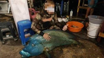 抓到了!2男獵殺30kg龍王鯛 魚體消失開查了